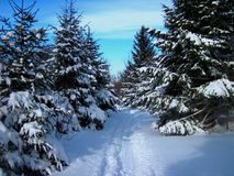 Snowmobiling le backcountry Image stock