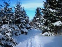 Snowmobiling o backcountry Imagem de Stock