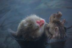 Snowmonkey, Schnee-Affe im Heißwasser bei Jigokudani Onsen auf Naga Stockfotos