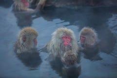 Snowmonkey snöapa i varmvatten på Jigokudani Onsen i Naga fotografering för bildbyråer