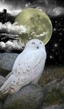 Snowowl och nattsky Royaltyfri Foto