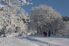 Snowparadise d'hiver Photos libres de droits