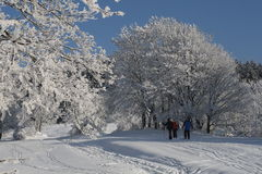 Snowparadise del invierno Fotos de archivo libres de regalías