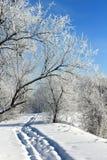 Snowpath en la luz del sol Fotos de archivo