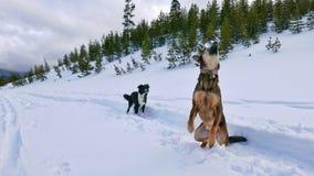 Snowplay Lizenzfreies Stockfoto