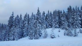 Snowqualmie通行证,华盛顿2 免版税库存照片