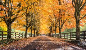 Snowqualmie Fall Colors Royalty Free Stock Photo