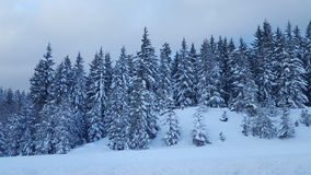 Snowqualmie Pass,  Washington 2 Royalty Free Stock Photo