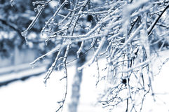 It snows Royalty Free Stock Photos