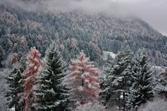 It snows abundantly on the mountains and forests of the North. The wonderful world of autumn forests stock photos