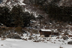Snows caped Yumthang Valley. It is also home to the Shingba Rhododendron Sanctuary, and has over twenty-four species of the rhododendron found in snow filled Royalty Free Stock Photo