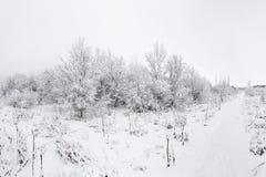 Красивое snowsacpe Стоковые Фотографии RF