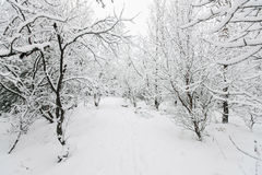 Snowsacpe bonito Imagem de Stock