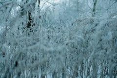 Snowscape με το δάσος στο χιόνι Στοκ φωτογραφία με δικαίωμα ελεύθερης χρήσης
