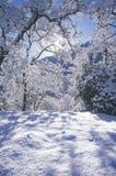 Snowscape, национальный парк секвойи, Калифорния Стоковая Фотография