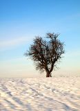 Snowscape Royalty Free Stock Photo
