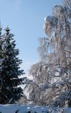 snowscape 免版税库存照片