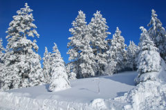 Snowscape Stockbild