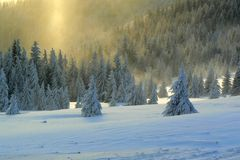 Snowscape. Beautyfull snowscape with a forest and sunshine Stock Images
