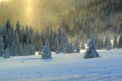 Snowscape Stock Afbeeldingen