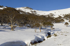 Snowscape australiano imagen de archivo libre de regalías