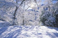 Snowscape, Sequoia εθνικό πάρκο, Καλιφόρνια Στοκ Φωτογραφία