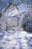 Snowscape, Sequoia National Park, California Stock Photography