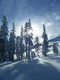 Snowscape. The sun peaking behind the snow covered trees Stock Image