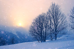 Snowscape sunset with snow fall Royalty Free Stock Images