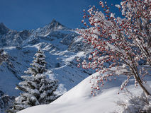 Snowscape - Swiss Alps Royalty Free Stock Images