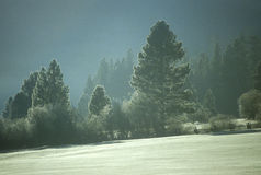 Snowscape, Yosemite, California Royalty Free Stock Photo
