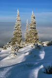 Snowscapes spruce above the clouds in winter in Beskidy Mountains Royalty Free Stock Photos