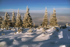 Snowscapes spruce above the clouds in winter Royalty Free Stock Photography
