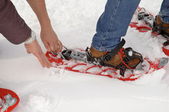 Snowshoe. Problem with snowshoe Stock Images