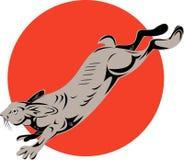 Snowshoe hare jumping Stock Photos