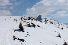 Snowshoe hike between Gasselhohe and  Rippetegg peak. Austria Royalty Free Stock Photo