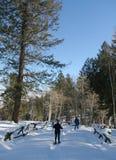 Snowshoe hiker, blue sky. Conifers, Cordillera, Colorado royalty free stock image