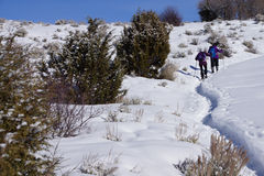 Snowshoe hikers ascend a hill. In the mountains of Colorado stock photos