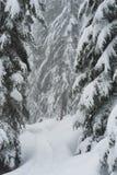 Snowshoe ślad na Cyprysowej górze Obraz Stock