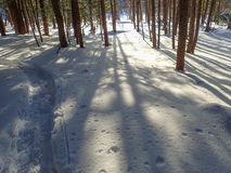 Snowshoe Path Royalty Free Stock Photos