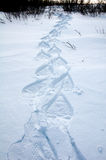 Snowshoe patterns Royalty Free Stock Images