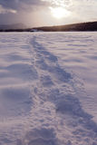 Snowshoe prints trail on snowy frozen lake surface Royalty Free Stock Photo