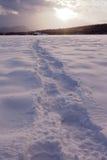Snowshoe prints trail on snowy frozen lake surface Royalty Free Stock Photo