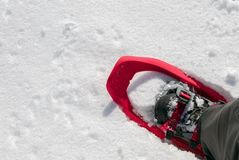 Snowshoe punched in the snow. Exploration background Stock Photography