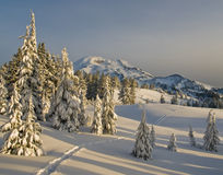 Snowshoe tracks in an alpine meadow Stock Photo