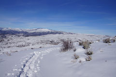 Snowshoe tracks on a hillside. In the mountains of  Colorado Stock Image