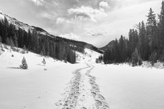 Snowshoe Tracks in the Mountains stock image