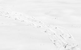 Snowshoe tracks in snow Royalty Free Stock Photo