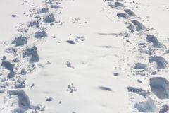 Snowshoe tracks of two people converge Stock Images