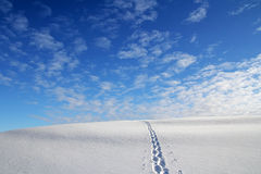 Snowshoe tracks in a winter landscape Royalty Free Stock Photo